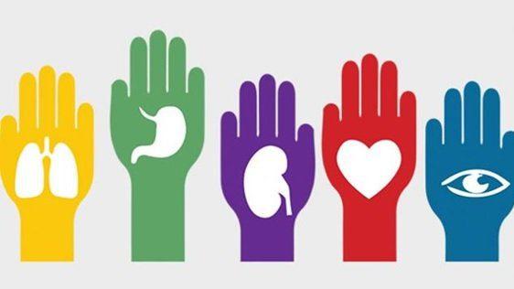 Día mundial del transplante de órganos y tejidos - 27 de Febrero
