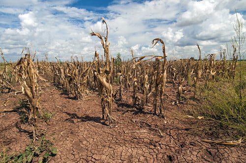 Día de lucha contra la desertificación - 17 de Junio